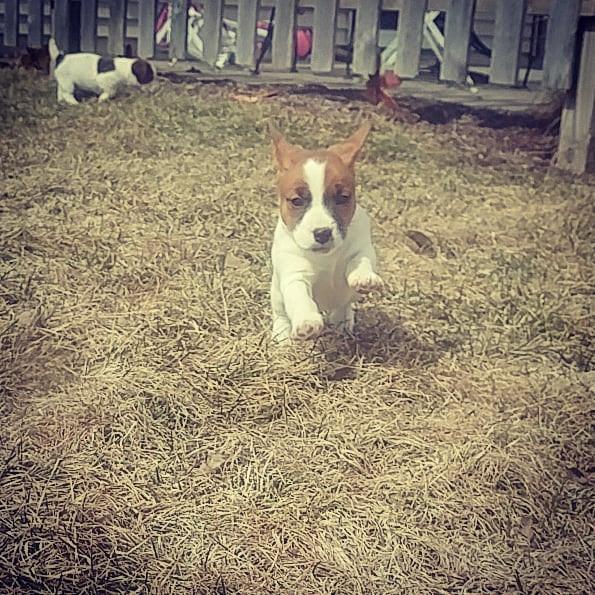Super pup!.jpg