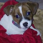 Meet Bailey.jpg