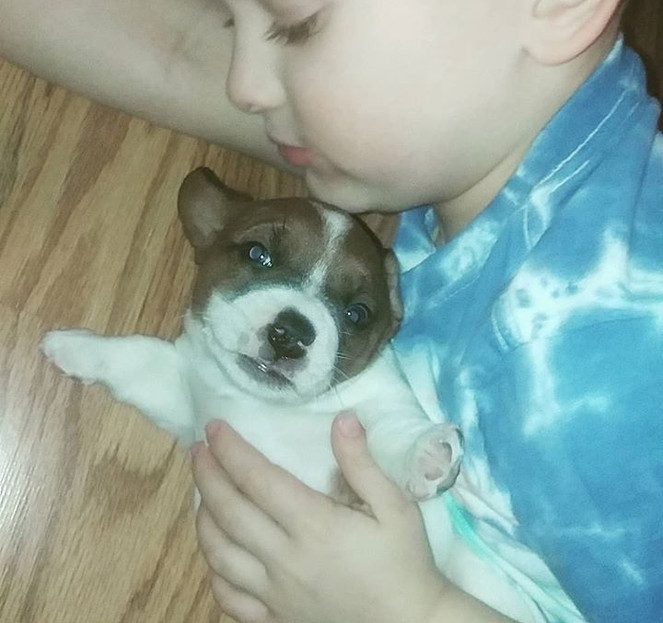 Puppy love....couldn't be sweeter..jpg