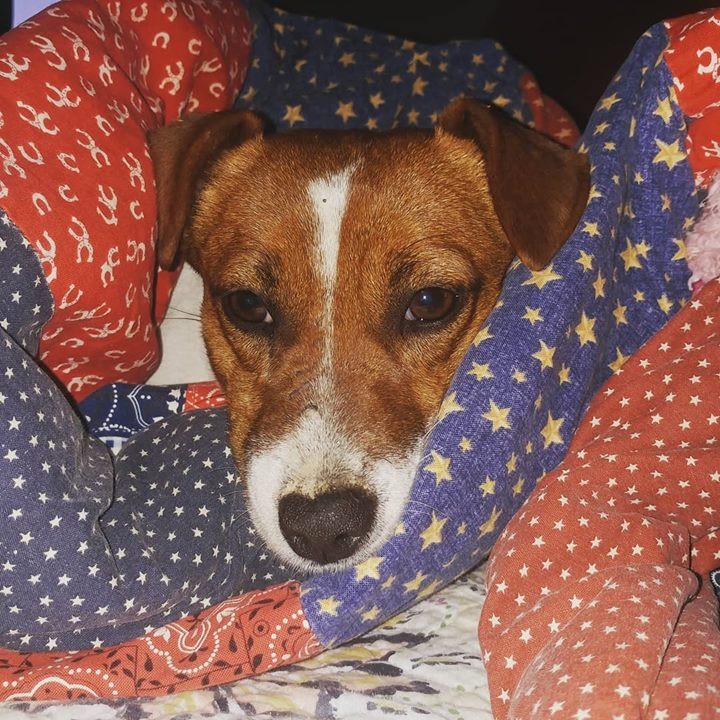 Snug as a dog in a blanket..jpg