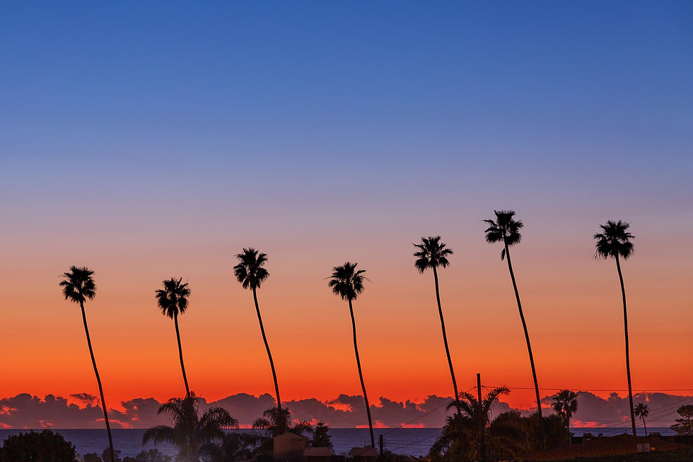 Palm trees with  Santa Barbara in the background
