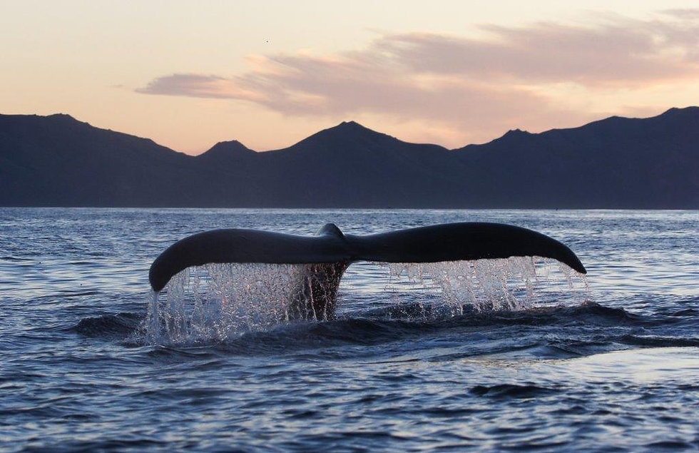 Whale tail sticking out of the ocean's water