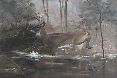 Deer in Swamp