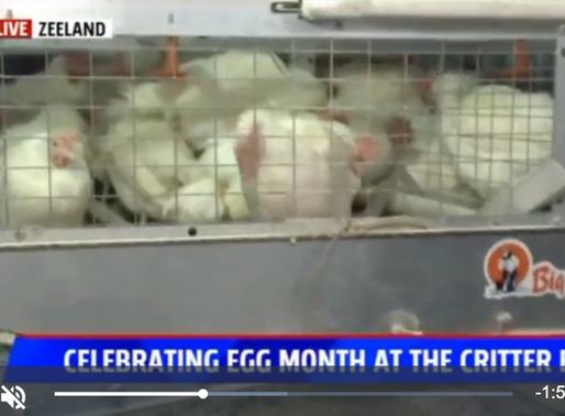 Celebrate Egg month at the Critter Barn- Fox17