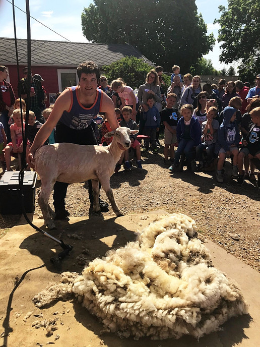 Shearing demo 2_edited.jpg