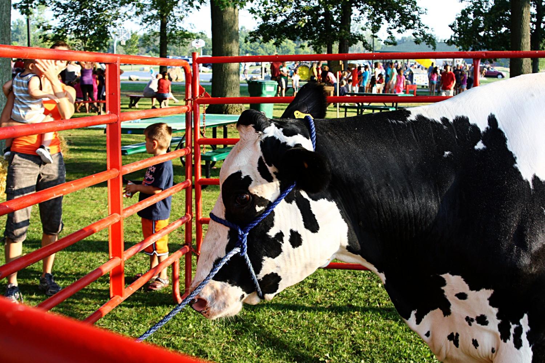 Visiting Dairy cow_edited.jpg