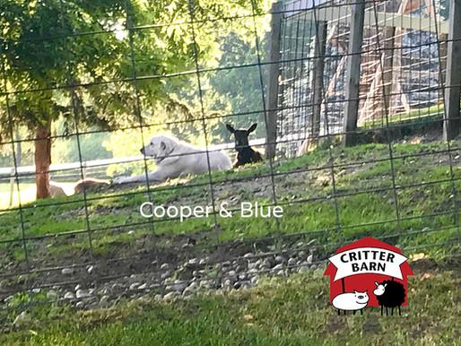 Cooper & Blue
