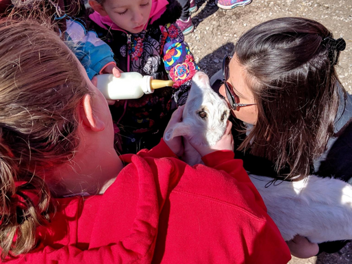 Critter Barn draws hundreds of families for annual spring fling- Holland Sentinel