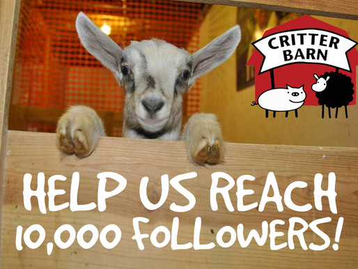 Help Us Reach 10,000 Followers!