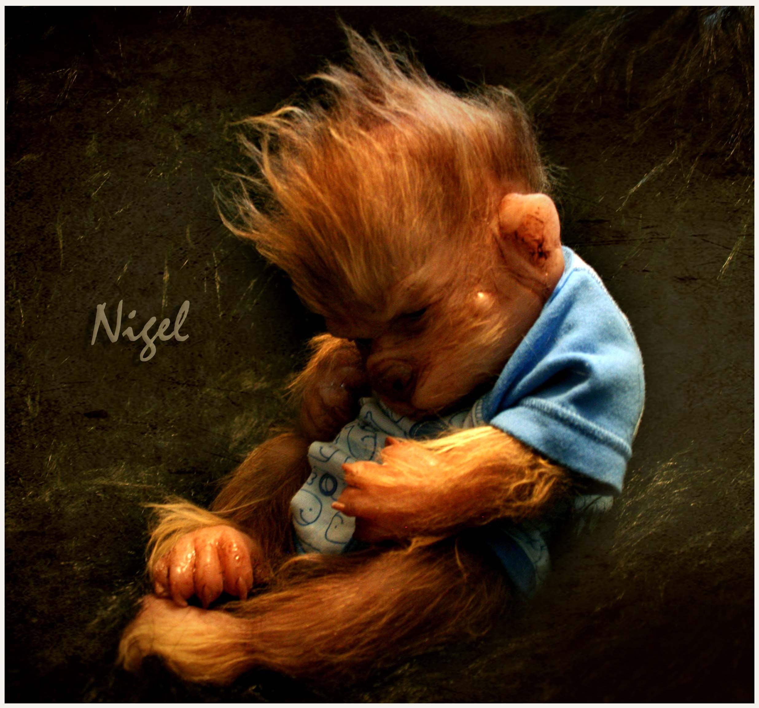Nigel's wild hair