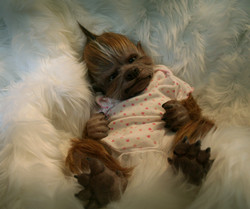 fluffy girl