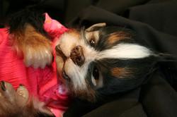 Puppy Girl