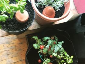 Toutes les usages du olla : semis, arbustes, etc.