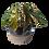 """Thumbnail: Cache-pots 5.5"""""""