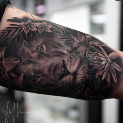 lion22.jpg