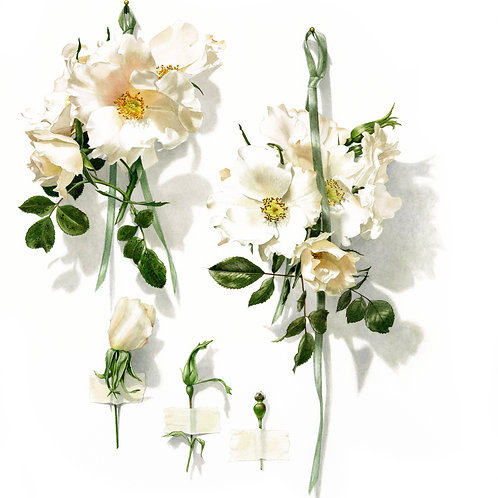 Beautiful white rose (White Star) contemporary floral painting by Billy Showell.