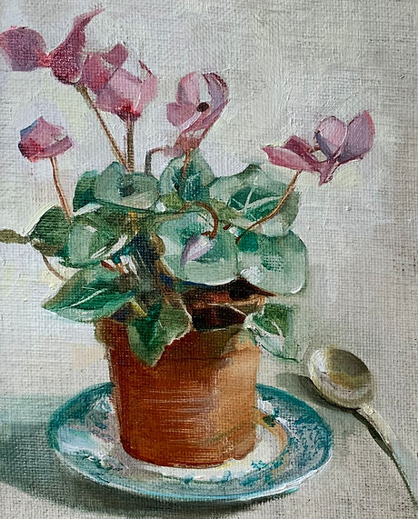 Harriet Salt Cyclamen.jpg