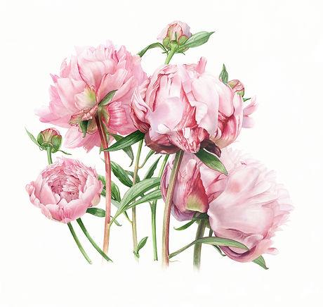 Pink Summer -Peonies big .jpg