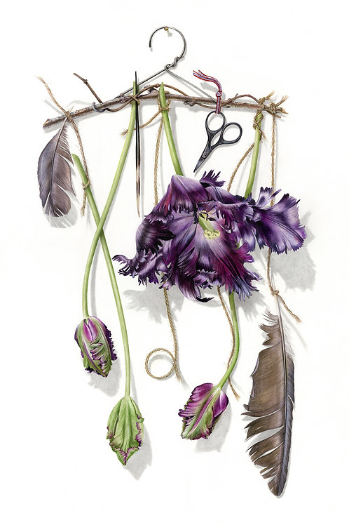 Beautiful contemporary botanical watercolour on cold pressed paper by Billy Showell. Beautiful for a sitting room.