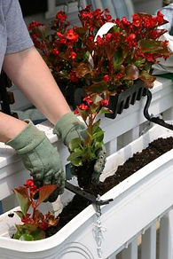 planter_jardiniere_balcon.jpg