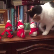 'My cat hates Christmas'