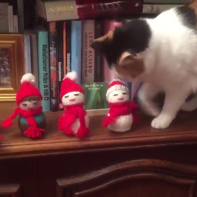'My cat hates Christmas'