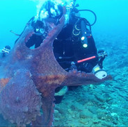 Massive octopus attacks diver, drags equipment through sea