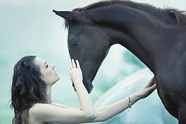 bien-être du cheval grâce à la médecine quantique