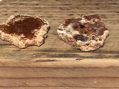 Fossilised Wood Slices