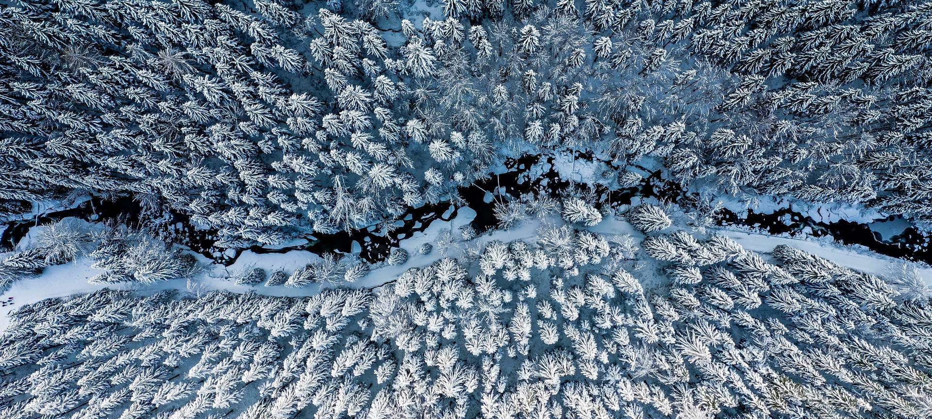 zim2-0306.jpg
