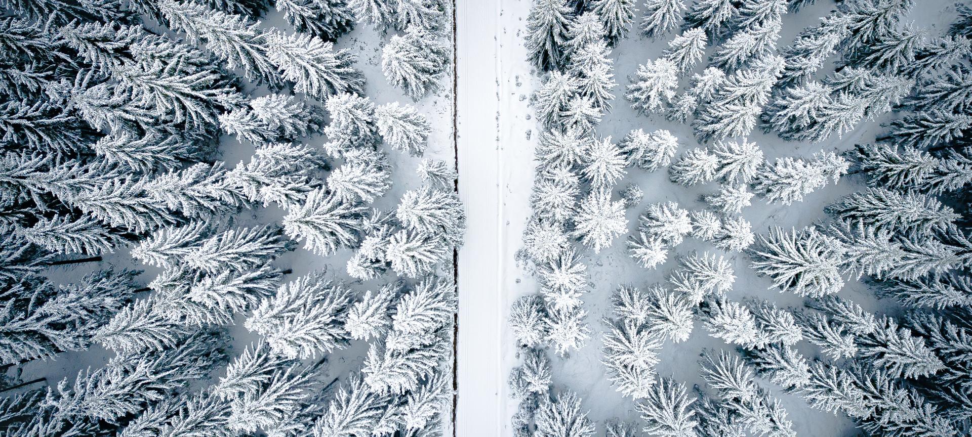 zim-0597.jpg