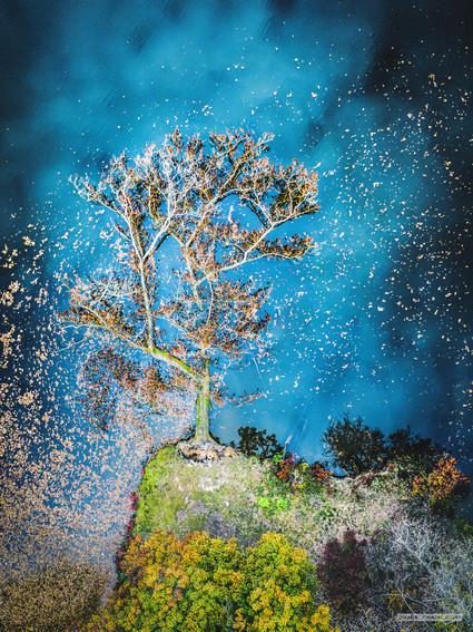 -- Průhonický park --   Ten strom se rozhodl spadnout ve správnou dobu. I odcházet se dá s grácií a podzimní barvy mu sluší tolik, kolik azuru vytvořilo pozdní zlaté slunce a božsky modré nebe.   Na plátně velikosti 1.5m teď visí u jednoho pána, kterého, jak mi říkal, s jeho slečnou vezme pokaždé na jiný trip. Pravda, oni tomu domácímu výletu ještě pomáhají nějakými přírodninami, ale dávejte si raději na tenhle obrázek pozor. Může vás hodit do sfér mimo tento svět.