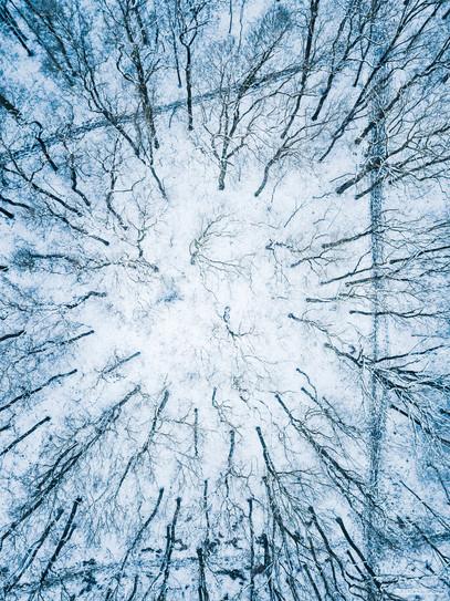 -- Obora Hvězda, Praha --   Hvězda je součástí galaxie, kde najdete i tyto bílé díry. Gravitují v ně kmeny stromů a lemují je siločáry historií Bílé hory.   Letohrádek, ten zná každý pražák.... Ale na tohle místo potřebujete teleskop.