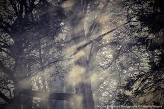 Ghostly Light