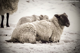 Mum keeps me warm