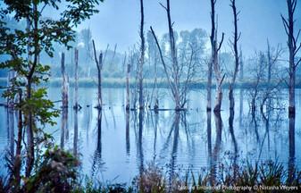Fishlake Meadows