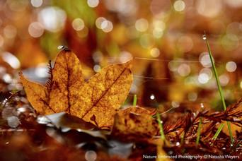 Fallen Autumn