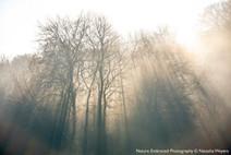 Enchanting sun rays