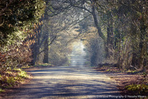 Charm of a country lane