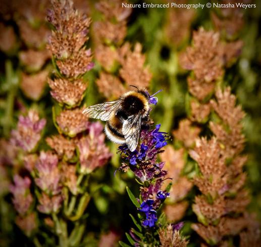 Bee in Sunlight
