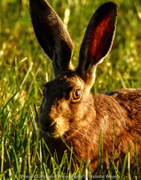 Did someone say 'Big Ears'