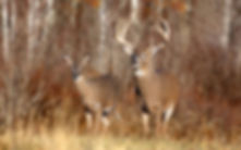 hunting regulations, licenses and places in St. Mary's county Maryland with The Tackle Box
