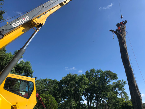 Crane assited tree removal