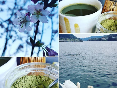 Matcha morning - in the heart of nature.