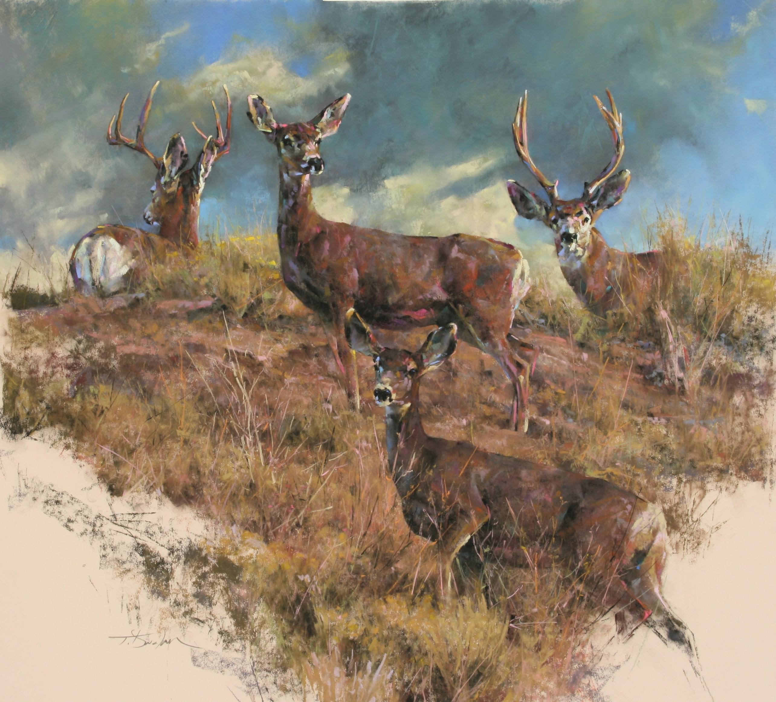 Greybull River Mule Deer