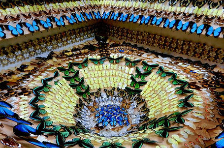 Ayr Nature Display The Well of Butterflies