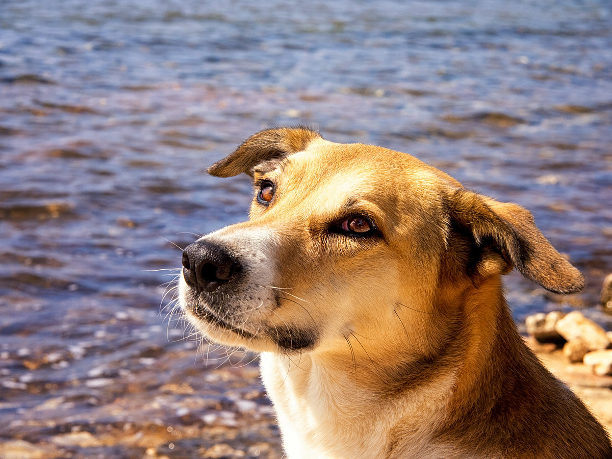 Tailz edmonton doggy daycare luxury overnight lodging pet spa shutterstock208864801 shutterstock102544742 shutterstock158157152 solutioingenieria Gallery
