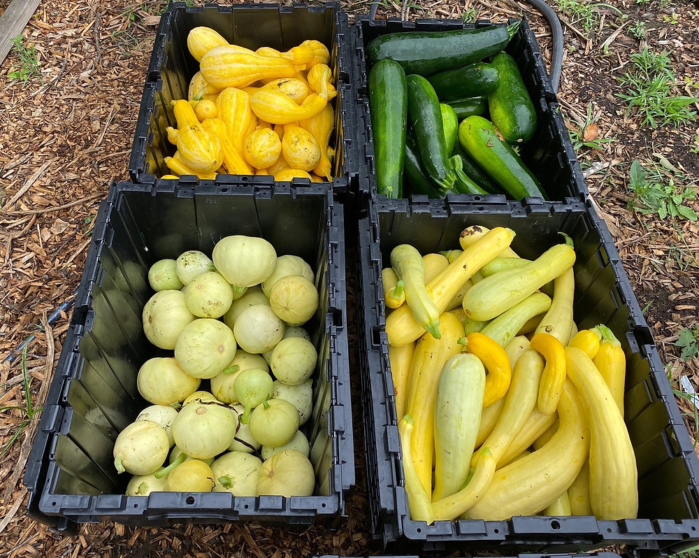 Whitfield Farm donated over 3000 pounds of vegetables in its first year to the Gemma Moran Food Pantry serving local agencies and individuals in need.