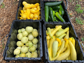 Giving Garden donates 3000 pounds of vegetables to Gemma Moran United Way SECT Food Pantry