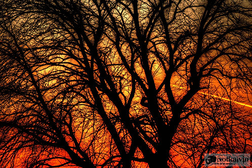 Sunset through the tree